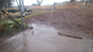 Rain! This picture was uploaded by NSW Country Hour to their Facebook page.